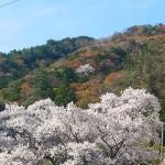 201544sakurayama